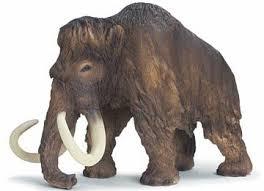 hvor stor er en mammuts fod